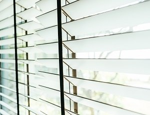 Bambus(1).jpg